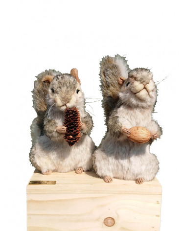 Two standing squirrels
